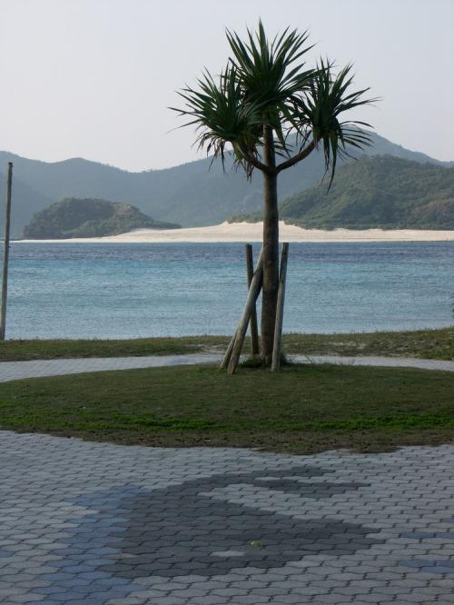 J_zamami_beach_palm