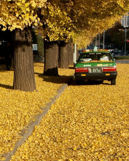 J_yellow_taxi